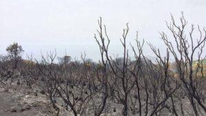 Pantelleria incendiata - Repubblica Palermo